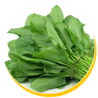 phytoecdysteroids contained in spinach